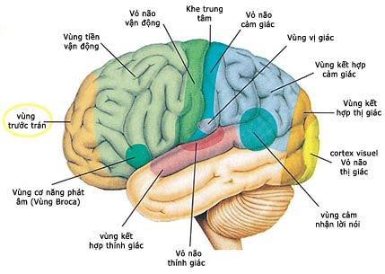 Suy nhược thần kinh